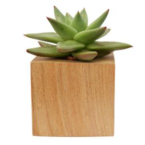Cactus y Suculentas Mini